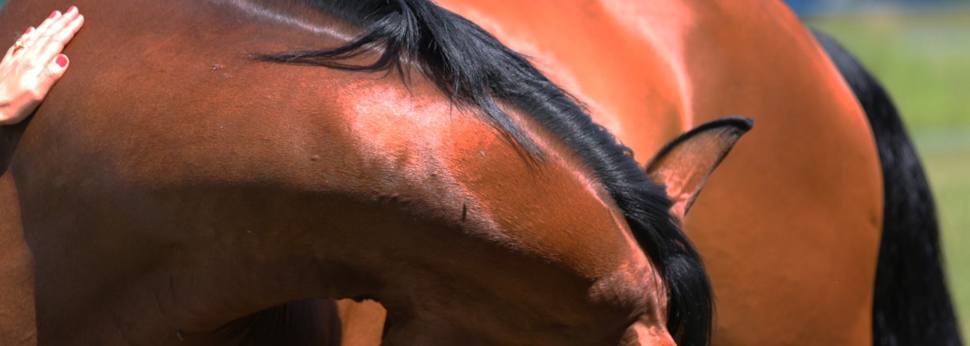 Qilin travaille grâce à l'effet miroir du cheval