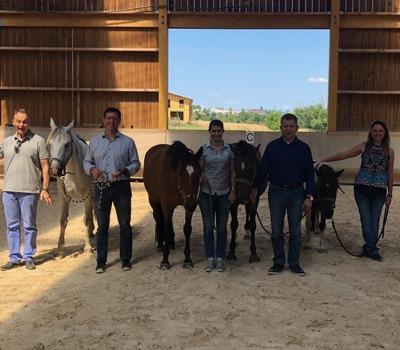 Coaching par le cheval pour une meilleure efficacité collective avec Qilin sa