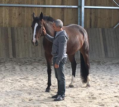 Qilin propose du Coaching personnel assisté par le chevalpour une meilleure connaissance de soi